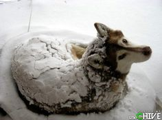 Snow dog :)