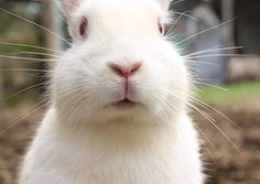 Eight Acts of Kindness for Animals This Season #BeCrueltyFree http://www.humanesociety.org/news/news/2014/12/eight-acts-of-kindness-for-animals-121014.html?referrer=https://www.google.com/