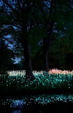 Forest of #Light at Longwood Gardens, Bruce Munro Ltd, #architecture #lighting