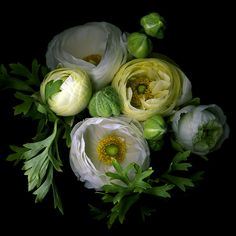 Ranunculus- ahh with some fern, beautiful!