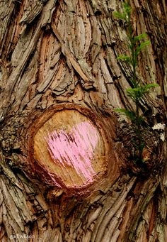"FACEBOOK  Gail Scott Wilson, ""Treat all scars with a little love and new growth will follow - #jozilandart"". https://www.facebook.com/gail.s.wilson.5/posts/779421758782813"