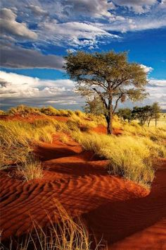 Single tree on the red dunes of Namibia late afternoon with clouds building up f. Single tree on t Beautiful World, Beautiful Places, Stunningly Beautiful, Beautiful Pictures, Landscape Photography, Nature Photography, Sustainable Tourism, Stock Foto, Nature Scenes
