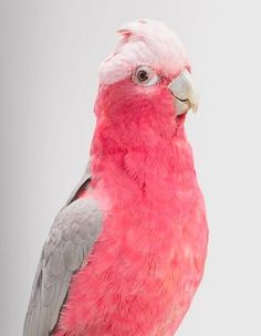 """Beautiful parakeet... if I saw this guy in a pet shop I'd probably buy him on the spot! """""""