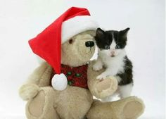 Christmas Kitten, Christmas Holidays, Dog Cat, Teddy Bear, Toys, Cute, Animals, Husband, Christmas Vacation
