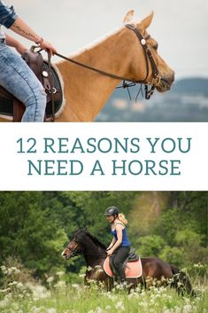 Thinking about getting a horse but still need a little convincing? Here are 12 reasons you should definitely get a horse! Buy A Horse, My Horse, Horse Gear, Equestrian Outfits, Equestrian Style, Horseback Riding Tips, Horse Care Tips, Types Of Horses, Horse Supplies