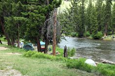 Slough Creek Campground. Yellowstone this was our site. It was amazing.  Buffalo ran through our camp, a bear sniffed around our tent at 4am, and across the creek wolves would hunt.