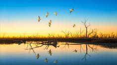 https://flic.kr/p/G1yqy1 | Last light at Menindee Lake |  Menindee Lake / NSW /  Australia