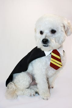 Harry Potter dog costume!  Brilliant!!