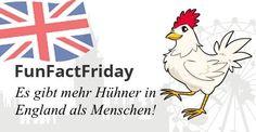 #FunFactFriday bei THE BRITISH SHOP: Es gibt mehr Hühner in England als Menschen! Bildnachweis: © ojal -www.kozzi.com; © leonido - www.kozzi.com; © kiddaikiddee -www.kozzi.com; © ddraw -www.kozzi.com