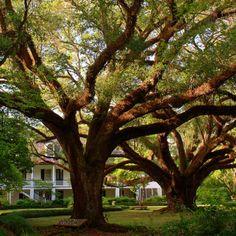 beautiful climbing trees