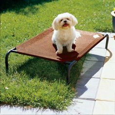 coolaroo dog bed elevated portable cot pet supplies raised ground knitted fabric