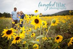 A wonderful shot of the family in the sunflower field! Outdoor Family Photos, Fall Family Pictures, Summer Pictures, Fall Photos, Family Pics, Dream Photography, Summer Photography, Family Photography, Photography Ideas