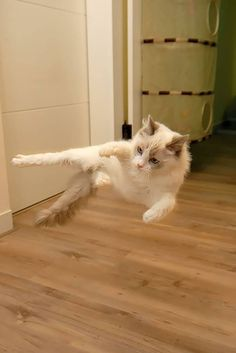 Cat ninja: To be as stealthy as a cat and a ninja combined. a house cat that has dedicated its life to the ninja life style. Silly Cats, Crazy Cats, Cats And Kittens, Cute Cats, Funny Pictures For Kids, Funny Pictures With Captions, Funny Animal Pictures, Animal Pics, Funny Animal Quotes