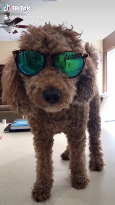 Mini golden doodle // tik tok // it wasn't me // too funny Funny Videos Clean, Super Funny Videos, Best Funny Videos, Funny Video Memes, Crazy Funny Memes, Funny Animal Memes, Really Funny Memes, Funny Animal Videos, Cute Baby Dogs