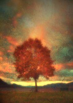 Tree on Fire - Tara Turner