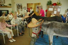Residents at Elmcroft senior home in Bloomsburg greet Honeybun and Henry, their therapy donkeys. Image: Donkey (© Courtesy of Youngs Funny Farm) Funny Farm, Funny Cute, Animal Heros, Mini Donkey, Knitting For Charity, Zebras, Pet Birds, Pet Care, Mammals