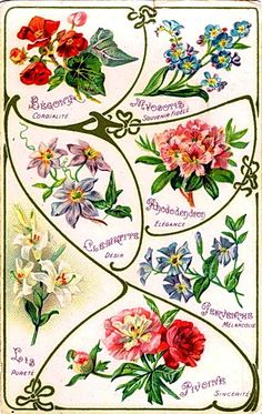 Meanings of flowers (French)