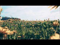Dandelion Field (Stock Footage)