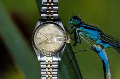 Vintage Rolex from 1979. (26 mm). #vintagerolex #goldenrolex #spiegelgrachtjuweliers  #watch #rolex #rolexwatches   rolex watches for men   rolex horloge voor heren   rolex horloge voor mannen   vintage watches   vintage horloges   horloges heren   SpiegelgrachtJuweliers.com