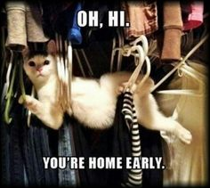 ...um, no worries, just hangin' out.