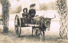 Harris Real Photo Postcard~Midget & Friend-Ox Drawn Wagon~St. Augustine FL