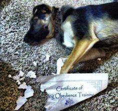 Bad dog! 29 ironic posts | iLyke