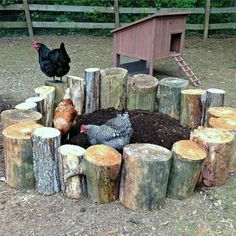 10 Toys for Your Backyard Chickens | The Owner-Builder Network More