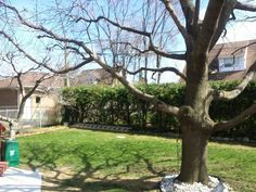 Remove unwanted limbs or trees before winter comes call for a free estimate 647-545-8733