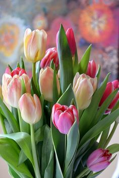 Tulips in bloom. Tulips Flowers, Daffodils, Pretty Flowers, Spring Flowers, Planting Flowers, Pink Tulips, Easter Flowers, Flowers Garden, Deco Floral
