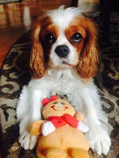 """""""Remember that gingerbread men, gingerbread houses, and gingerbread cookies are the MOST important part of the holidays."""" — Olive 