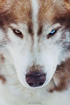 Husky Lifestyle - Хаски как образ жизни - Медиа