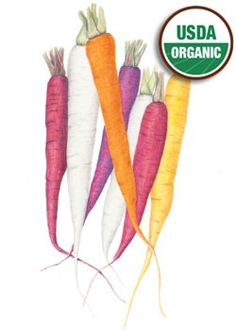 Carrot Carnival Blend :love these illustrations for Botanical Interests Seeds