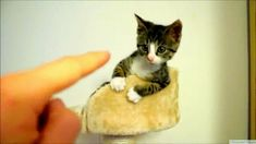 Cutest Cat gif ever.