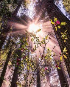 "2,649 aprecieri, 42 comentarii - F:🦋gokbennsezer 🦋ekilemmm (@turklikeben) pe Instagram: ""TEBRİKLER👏🏻👏🏻🏆👏🏻👏🏻👏🏻 Congratulations !!! ➖➖💠➖➖➖ Photo 👉🏻 @gettyphotography 👈🏻 Seçim / selected by…"" Beauty Photography, Travel Photography, Kissing In The Rain, Light Of The World, Just Amazing, Natural Wonders, Trees To Plant, Pretty Pictures, Twitter"