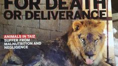 Close Taiz Zoo and Release All Animals to Sanctuary | The long conflict that has…