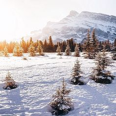 Instagram's vincentdemers transports us to a very snowy Banff National Park, where the morning sun is just beginning to make its presence known.