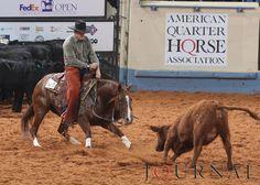 Quarter Horse Worlds - cutting