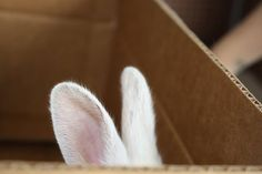 bunny hover