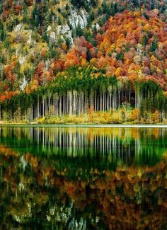 Autumn forest by Gerhardt Vlcek ""