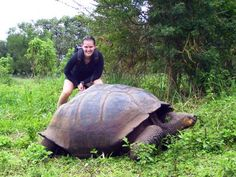 Galapagos Turtle - Get your perfect travel guide to Galapagos from www.GUIDORA.com