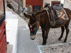 Donkeys in a popular tourist town are being forced to work under terrible conditions. These animals often go for hours without water, shade, or rest, carrying loads far greater than they can comfortably bear. Sign this petition to protect these working donkeys from lives of neglect and misery.