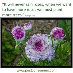 Gardening Quote:  George Eliot