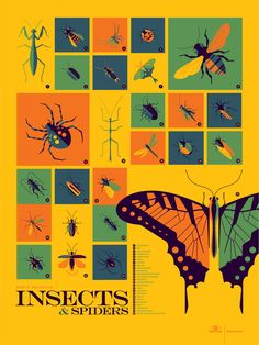 Insects and Spiders infographic screenprinted poster by Tom Whalen. Part of inaugural Info-Rama show at Phone Booth Gallery, 2014.