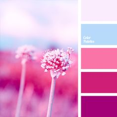 Gamma of rich pink shades (from fuchsia color to neutral pink) is supplemented with sky-blue and gray-white colors. This palette can be used in the festive decoration of the room with fresh flowers: combination of juicy pink shades with a transparent blue color in each bouquet will look impressive and will match the atmosphere of holiday.