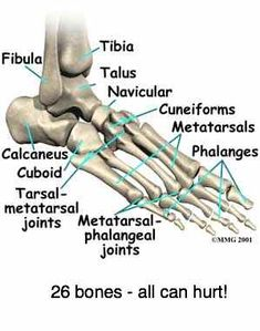 ANKLE JOINT PAIN complex joints causing a lot of misery.