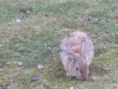 A rabbit!