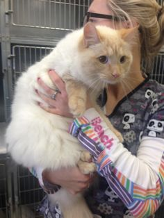 Found Cat - Ragdoll - Rockwood, ON, Canada on January 10, 2015 (13:00 PM)