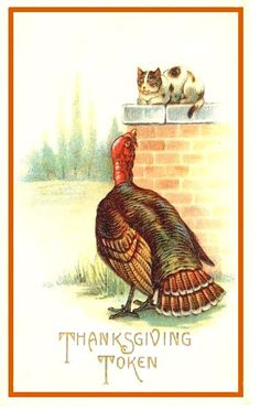 Thanksgiving cat and turkey