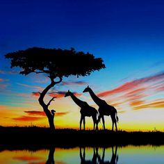 this makes me think of lion king. lol beautiful colors