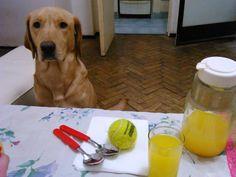 Está todo bien con que quieras jugar, pero la pelota babeada en la mesa donde estamos almorzando, te parece bien?
